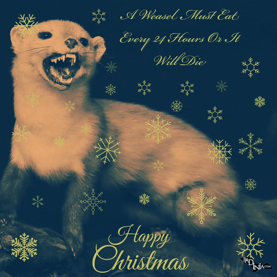 weasel christmas card weasel facts